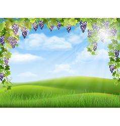 Grapes and rural landscape vector