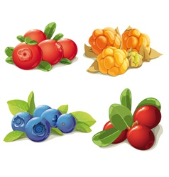 set of mature berries vector image