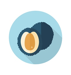 Lychee flat icon tropical fruit vector