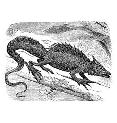 Basilisk vintage engraving vector image vector image