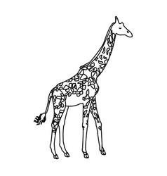 giraffe animal herbivore african wildlife vector image