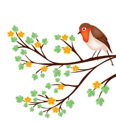 tree branch with a robin vector image vector image