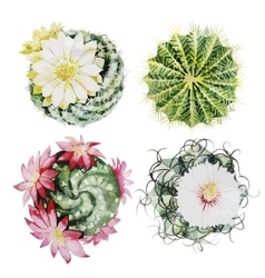 Watercolor cactus set vector