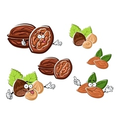 Almond walnut and hazelnut with kernels vector