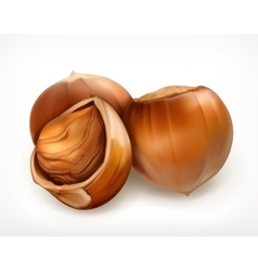 Hazelnuts in shell icon vector image vector image