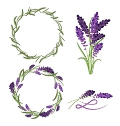 Provence lavender flower bouquet set vector