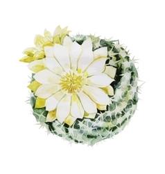 Watercolor flowering cactus vector image vector image