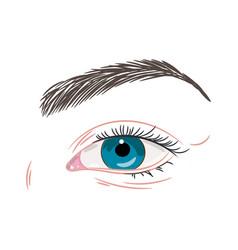 blue female eye non make up vector image
