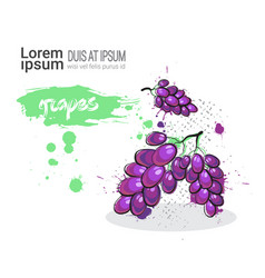 Grape hand drawn watercolor fruit on white vector