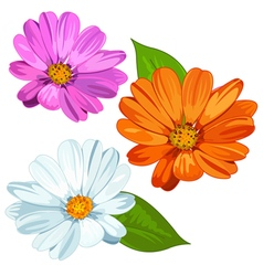 Set of daisies vector