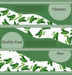 round peas with green stem leaf vector image