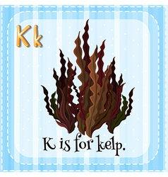 Flashcard letter k is for kelp vector
