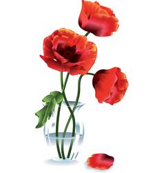 Flower poppy vector
