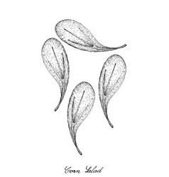 Hand drawn of corn salad on white background vector