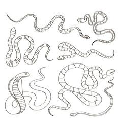 hand drawn snake set vector image vector image