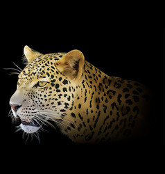 leopard on black background vector image vector image