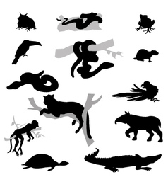 Amazone animals set vector