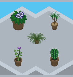 Isometric houseplant set of flower flowerpot vector
