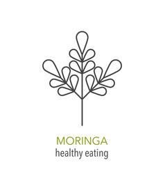 Moringa line icon vector