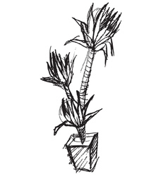 Palm tree pot hand drawing sketch vector
