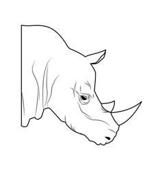 Rhino head wild animal africa exotic vector