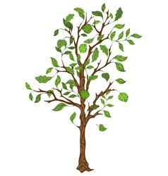 Single tree with leaves vector image vector image