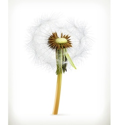 Head of dandelion summer flowers icon vector