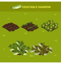 SET 3 Isometric Stage of growth Vegetable marrow vector image