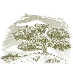 Tree on a hill drawing vector