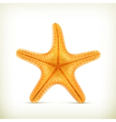 Starfish realistic icons vector