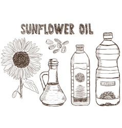 sunflower oils drawing vector image