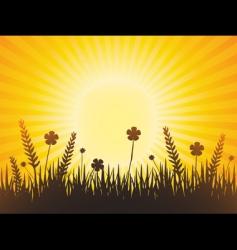 poppy meadow with sunburst sky vector image