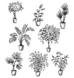 Set of home flowers in pots vector
