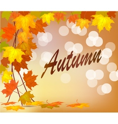 Autumn foliage sale banner vector