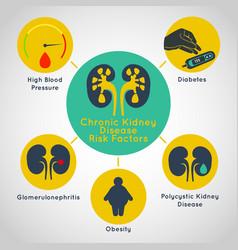 chronic kidney disease risk factors icon vector image