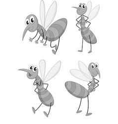 Mosquito in four different poses vector image vector image