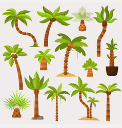 Palma palmaceous tropical tree with coconut vector