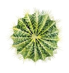 Watercolor green cactus vector image vector image