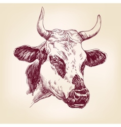 Cow hand drawn llustration realistic sketch vector