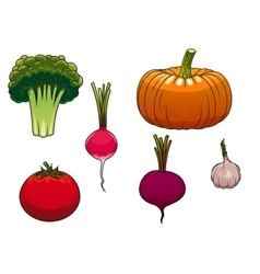 Fresh and ripe farm vegetables vector