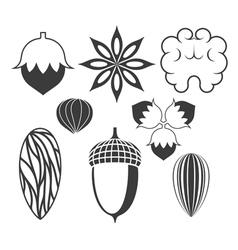 Nuts vector image vector image