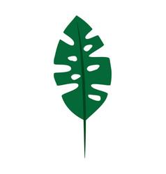 Tropical leaf plant natural wild botanical vector