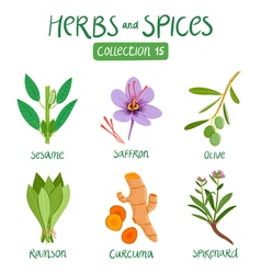 Herbs and spices collection 15 vector