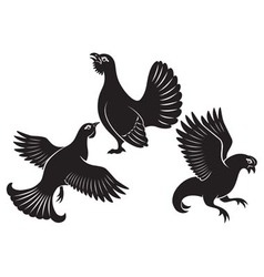 Bird grouse vector