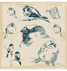 Sparrows retro collection vector