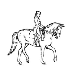 equestrian horse vector image