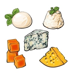 Set of different cheeses mozarella cheddar vector image