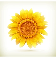 sunflower high quality vector image