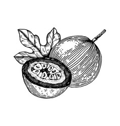 Passion fruit engraving vector