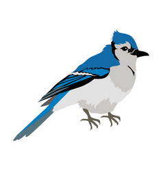 Blue jay flat design vector